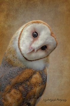 "Barn Owl /""Forward/"" Tyto alba Original Graphite Drawing PRINT Raptor Bird Nature"