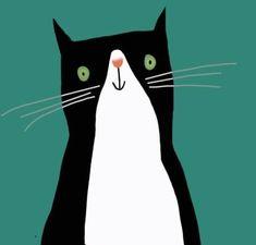 Tuxedo cat.