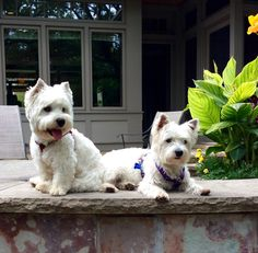 Piper and Windsor on squirrel patrol