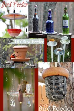 6 DIY Bird Feeders