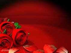 animated red | Animated+Red+Roses.jpg