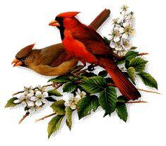 gif em movimento de pássaros brasileiros - Pesquisa Google