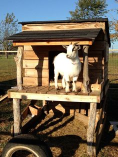 goat house - Google Search                                                                                                                                                     More
