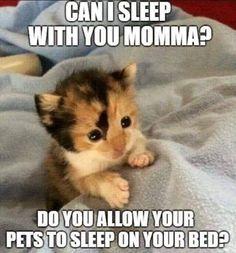 Cat Memes Of The Day 30 Pics – Chat Memes Du Jour 30 Photos – – Monde des beaux animaux Funny Animal Jokes, Funny Cat Memes, Cute Funny Animals, Cute Cats, Funny Cats, Fun Funny, Kittens Cutest, Cats And Kittens, Cats Bus