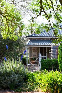"""With her artistic eye, Jenni has created lovely textures in her garden, although she insists it's """"mostly an accident"""". Here, the homestead is framed by branches of a golden ash with plantings of echium, succulents and agapanthus producing a symphony of greens. Popping out of the echium are steel rods topped with blue bottles."""