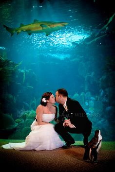 Did you have #penguins and sharks at your #wedding?! At the Florida #Aquarium {RBF Photography}