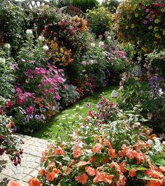 My Garden Flowers | Flickr - Photo Sharing!