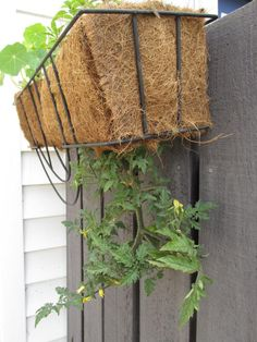 If you don't have a room in your home, you can still garden is small spaces with hanging baskets. Check out these plants that thrive in baskets.