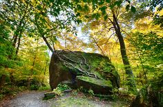 Tree Growing From Living Rock On Smuggler's Notch by Jeff Folger