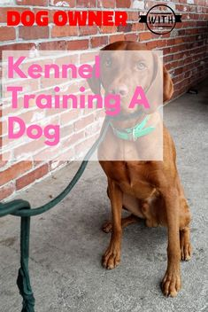 Kennel training is useful with youthful dogs and also older puppies with stress and anxiety issues. The greatest goal regarding crate exercising is trying to keep your dog away from harms approach. Kennel Training A Dog, Crate Training, Dog Training Tips, Stress And Anxiety, Dog Owners, Crates, Stuff To Do, Have Fun, Image Link