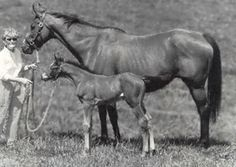 Blue Hen mare Won't Tell You with one of her 13 foals  Won't Tell You, by Crafty Admiral, was the dam of Triple Crown winner Affirmed, and stakes winners Love You Dear, Silent Fox, and Won't She Tell