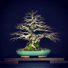 Bonsai (Species Unknown) Photo By Instagram User Yoelcuesta