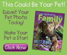 Does your pet play a starring role in your family? Let everyone know by entering Chesapeake Family Magazine's Pet Cover Photo Contest. Whether cat, dog, rabbit, guinea pig, hamster, or other loveable friend, we'll showcase one lucky winner on the cover of Chesapeake Family's February 2015 issue.