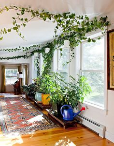 Indoor Climbing Plants Vines vines vine house plants indoor climbing Source: website create green environment home Source: website ma. Vine House Plants, House Plants Decor, Fake Plants Decor, Indoor Climbing Plants, Indoor Plants, Climbing Vines, Indoor Garden, Ivy Plants, Indoor Plant Decor