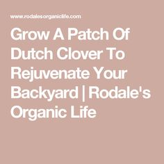 Grow A Patch Of Dutch Clover To Rejuvenate Your Backyard | Rodale's Organic Life