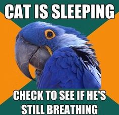 Hahaha I do this all the time. Love my cat!