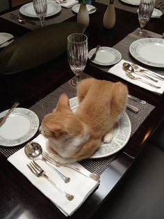 dinner served :D