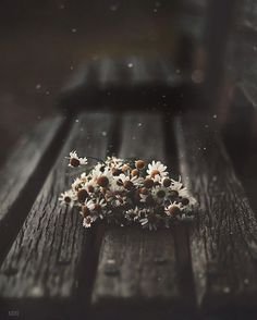 Her Wallpaper, Flower Phone Wallpaper, Scenery Wallpaper, Nature Wallpaper, Aesthetic Iphone Wallpaper, Aesthetic Wallpapers, Aesthetic Drawing, Flower Aesthetic, Creative Photography
