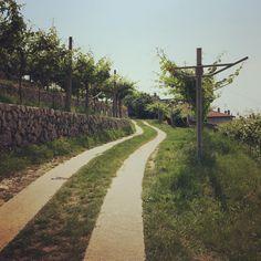 Passeggiando tra i vigneti...❤️ #CantineAperte #winelovers