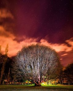 On instagram by andycollins1992 #astrophotography #contratahotel (o) http://ift.tt/2bwVQgo College Co. Meath Ireland. This sycamore maple tree is estimated to be 236 years old. Taken at around 12 at night. Light painted the tree with my torch during the 30 seconds exposure. #tree #maple #sycamore #forest #gormanston #meath #ireland  #longexposure #slowshutter #lightpainting #nikon #stars #sky #dark #night #discoverireland #travelireland #irish #old #college #landscapephotography…