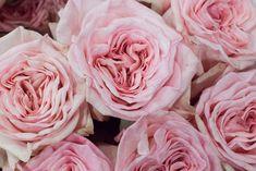 Pink O'Hara roses at New Covent Garden Flower Market - August 2015 Wedding Flower Inspiration, Wedding Flowers, Wedding Ideas, Wedding Dresses, New Covent Garden Market, Pink Garden, Garden Roses, Diy Garden Furniture, Rose Stem