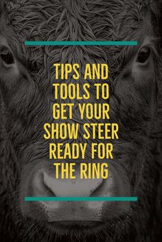 We found some great tips and tools to get you better prepared for your livestock show. Livestock Judging, Livestock Farming, Showing Livestock, Pig Farming, Calf Training, Show Steers, Show Cows, 4 H Club, Pig Showing