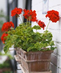 10 Goofproof Outdoor Plants - - If tending to your flora is leaving you feeling wilted, take heart: These plants are almost impossible to kill. Patio Plants, Outdoor Plants, Garden Plants, Outdoor Gardens, Potted Plants, Outside Plants, Tomato Plants, Plants Indoor, Container Plants