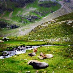 Green carpet show, Tyrol - Austria