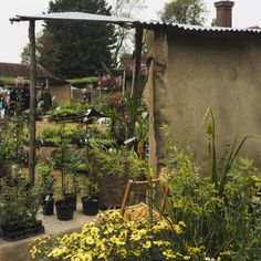 The Great Dixter Plant Fairs – at the heart of the garden community – The Middle-Sized Garden – Do it YourSelf Interior Design Dry Shade Plants, Big Plants, Rare Plants, Meme Design, Insect Hotel, Famous Gardens, English Country Style, Low Maintenance Garden, Kew Gardens
