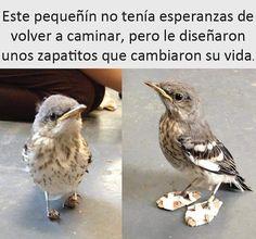 Bieeeen!! #memes #chistes #chistesmalos #imagenesgraciosas #humor