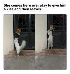 A forbidden love between a cat and a dog. priceless.