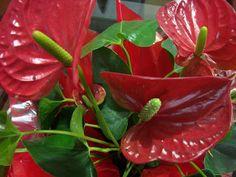 Os Paisagistas: Plantas ornamentais de sombra