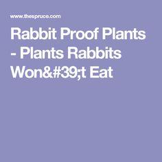 Rabbit Proof Plants - Plants Rabbits Won& Eat