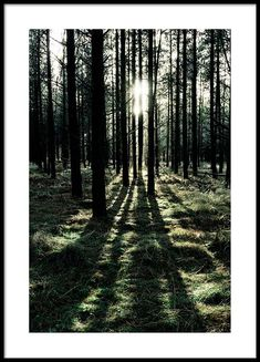 Sunlight in forest Poster in the group Posters & Prints at Desenio AB (2744)