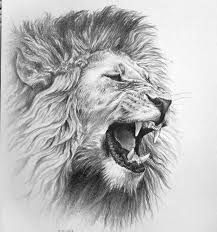 cool drawings of animals - Google Search