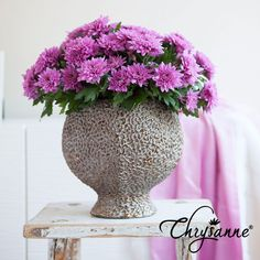 Amazing Chrysanne® Chrysanthemum, Awesome, Amazing, Glass Vase, Interior, Creative, Flowers, Plants, Gifts