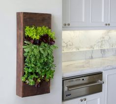 Small indoor herb garden - might be adaptable for an RV kitchen wall.