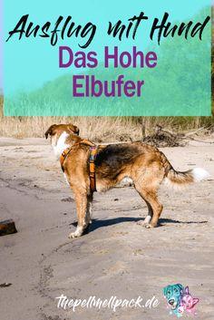 Ausflug mit Hund in Norddeutschland -- Wanderung an der Elbe - wo sich Sandstrände, Auwälder und Biberburgen abwechseln | Hund | Wanderung | Unterwegs | Ausflug | Norddeutschland | thepellmellpack.de