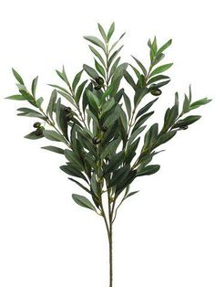 "Earthflora > Tuscan Faux Olive Branches > EF-754 23"" Olive Spray w/Olives Green (Price is for 1 Dozen) Art Mural Vert, Artificial Plants And Trees, Plant Aesthetic, Green Wall Art, Plants Are Friends, Silk Plants, Decorative Planters, Photoshop, Tree Silhouette"