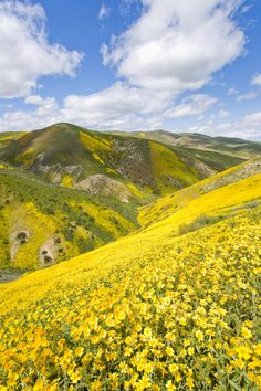 Tracking the superbloom out at Carrizo Plain and we came across this spectacular scene.