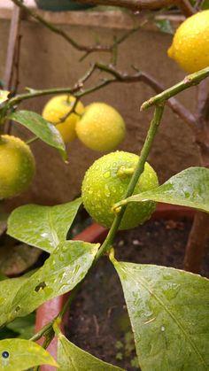 Maumau74 ha appena caricato la foto pioggia su limone su Best Phone Pics con lo smartphone LG G4