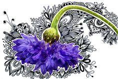 Corn Flower Photangle - By Alycia Rowe