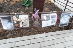 A memorial for Baby Girl, who was shot by NYPD officers at Schmul Park in Staten Island on April 13.