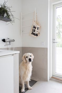 Own shower for doggies is a must! Mudroom Laundry Room, Dog Rooms, Dog Shower, My Dream Home, Building A House, Sweet Home, New Homes, Home Appliances, House Design