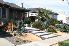 Great mix of big/small succulents. Lovely drought-resistant design.