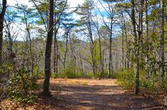 Great tract of land suitable for building your dream home, a getaway cabin, or just a weekend camping retreat! Nice wide road ending at a small cleared area. Lots of walking, 4-wheeling trails already available. Cut a few trees and have a great view of the surrounding mountains. #home #property #forsale #farm #landrealestate #mountainhome #newhome #househunting #land #landforsale #house #luxuryrealestate #realty #homesweethome #valand #blueridge #homesforsale #blueridgemountains #brmre Getaway Cabins, Blue Ridge Mountains, Build Your Dream Home, Land For Sale, Great View, Luxury Real Estate, Acre, Dreaming Of You, Trail