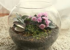 Make Your Own Terrarium: Open terrariums give you more options, because the plants can be placed in moderate to bright light and can take either moist or drier soil. Nearly all miniature forms of houseplants will work. Here are a few favorites: • Succulents • African violets • Splash plant • Waffle plant • Earth stars