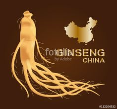 """Download the royalty-free vector """"ginseng vector , ginseng of China , ancient traditional medicine """" designed by gritsalak at the lowest price on Fotolia.com. Browse our cheap image bank online to find the perfect stock vector for your marketing projects!"""