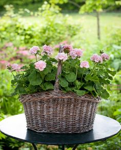 A wicker basket becomes a charming planter for these pink geraniums. Container Flowers, Container Plants, Container Gardening, Succulent Containers, Pink Geranium, Cottage Garden Design, Deco Floral, Garden Planters, Fall Planters