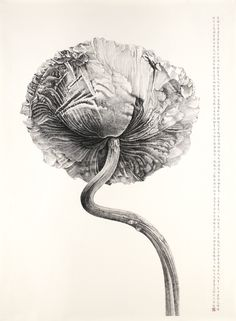 The Origo Collection Contemporary Ink Art View AUCTION DETAILS, bid, buy and collect the various artworks at Sothebys Art Auction House. Botanical Drawings, Botanical Art, Botanical Illustration, Tinta China, Gravure, Art Auction, Ink Art, Chinese Art, Monochrome